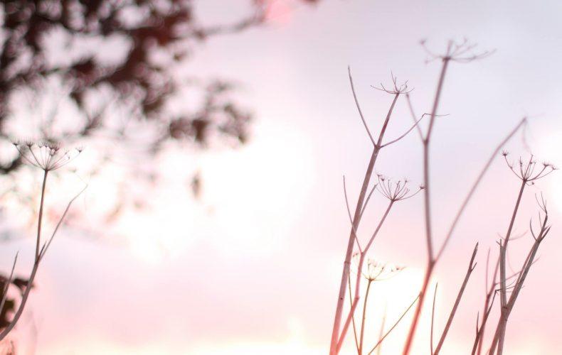 Sunshine and trees