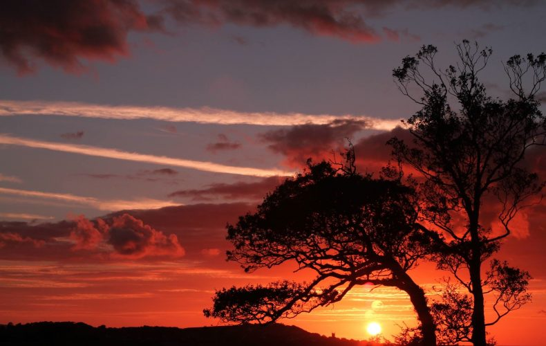 Sun set with black trees