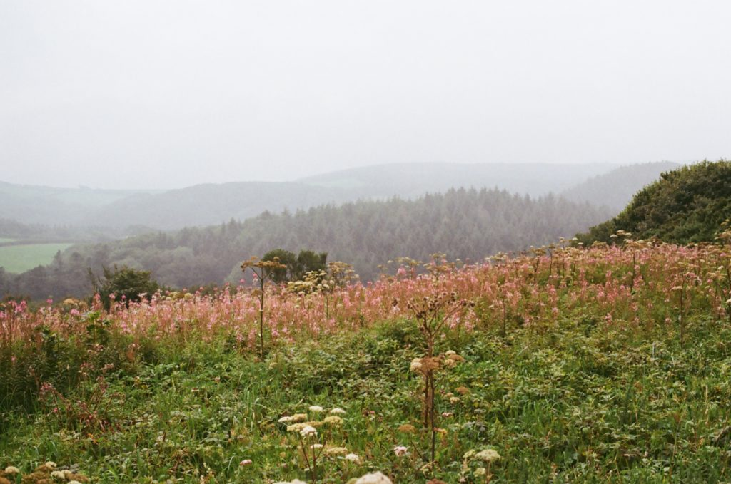 Clovelly hills in mist
