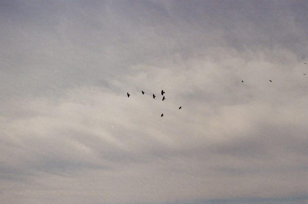 Black Birds in sky