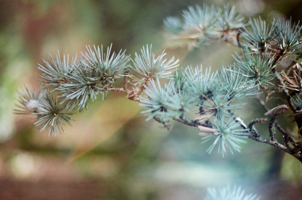 Blue spiky leaves and branch